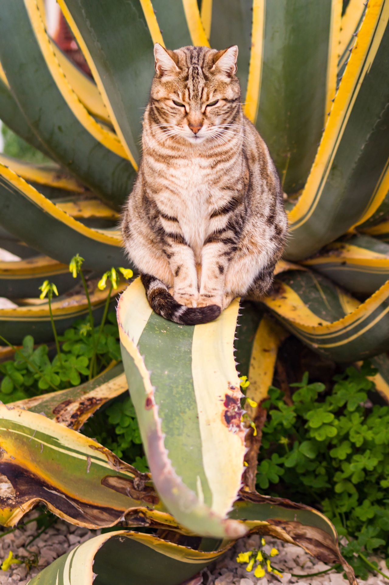 Photography Photo Photooftheday Cat Love Faro Algarve One Animal Domestic Cat Sitting Pets Leaf Plant Sleepy Portugal Albeferia Cute Cute Pets Love ♥ Lovely EyeEmBestPics EyeEm Photographer Photo Of The Day