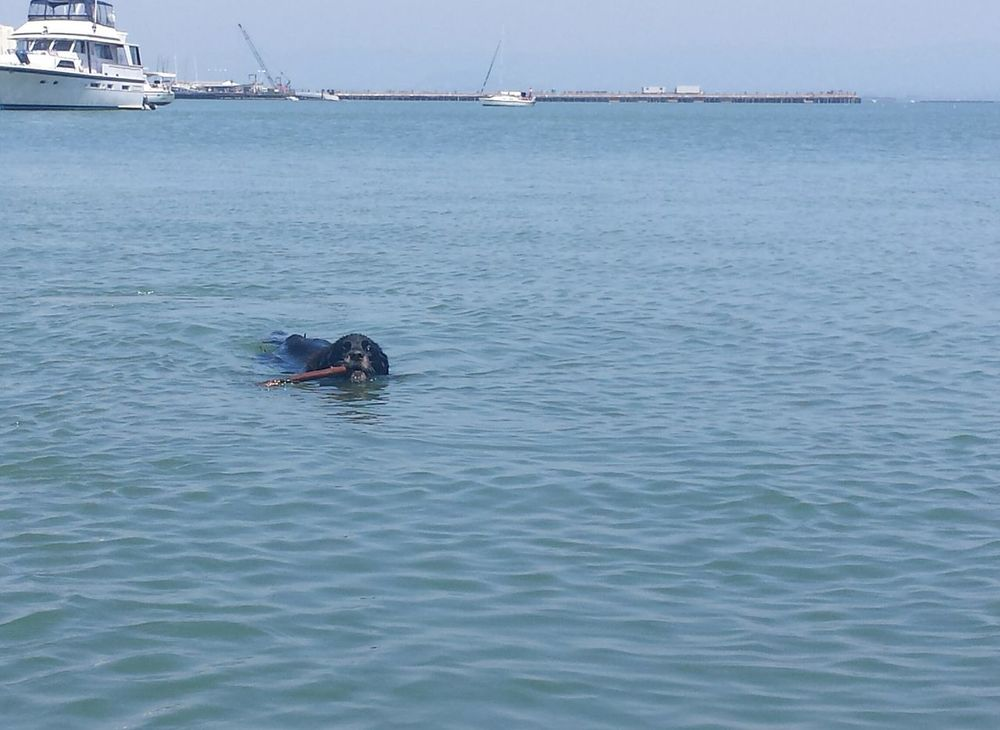 Capture The Moment Dog Days Of Summer Dog I Love My Dog Summer Dogs Eye Em A Dog Swimming My Dog Is Cooler Than Maddie