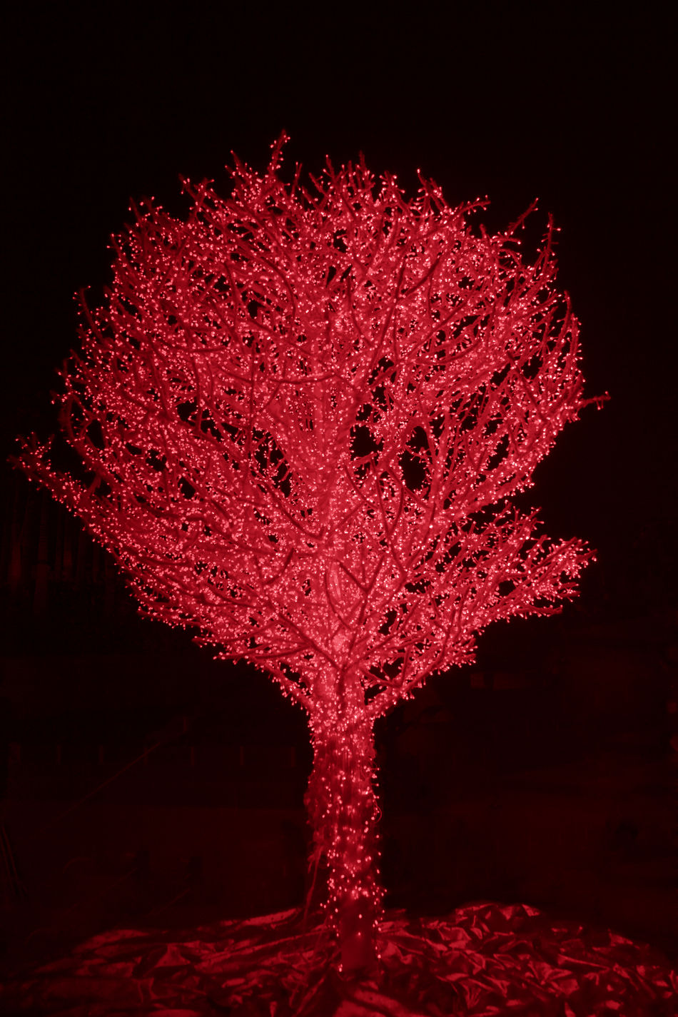 Red Tree decorated with fairy lights for Christmas - Hong Kong at Night, China, Asia Black Background Celebration Christmas Christmas Decoration Christmas Lights Christmas Tree Decoration Fairy Fairy Lights Full Length Hong Kong Illuminated Light Lights Merry Christmas! Nature Neon Lights Night Red Single Tree Tree Xmas Xmas Decorations Xmas Lights  Xmas Tree