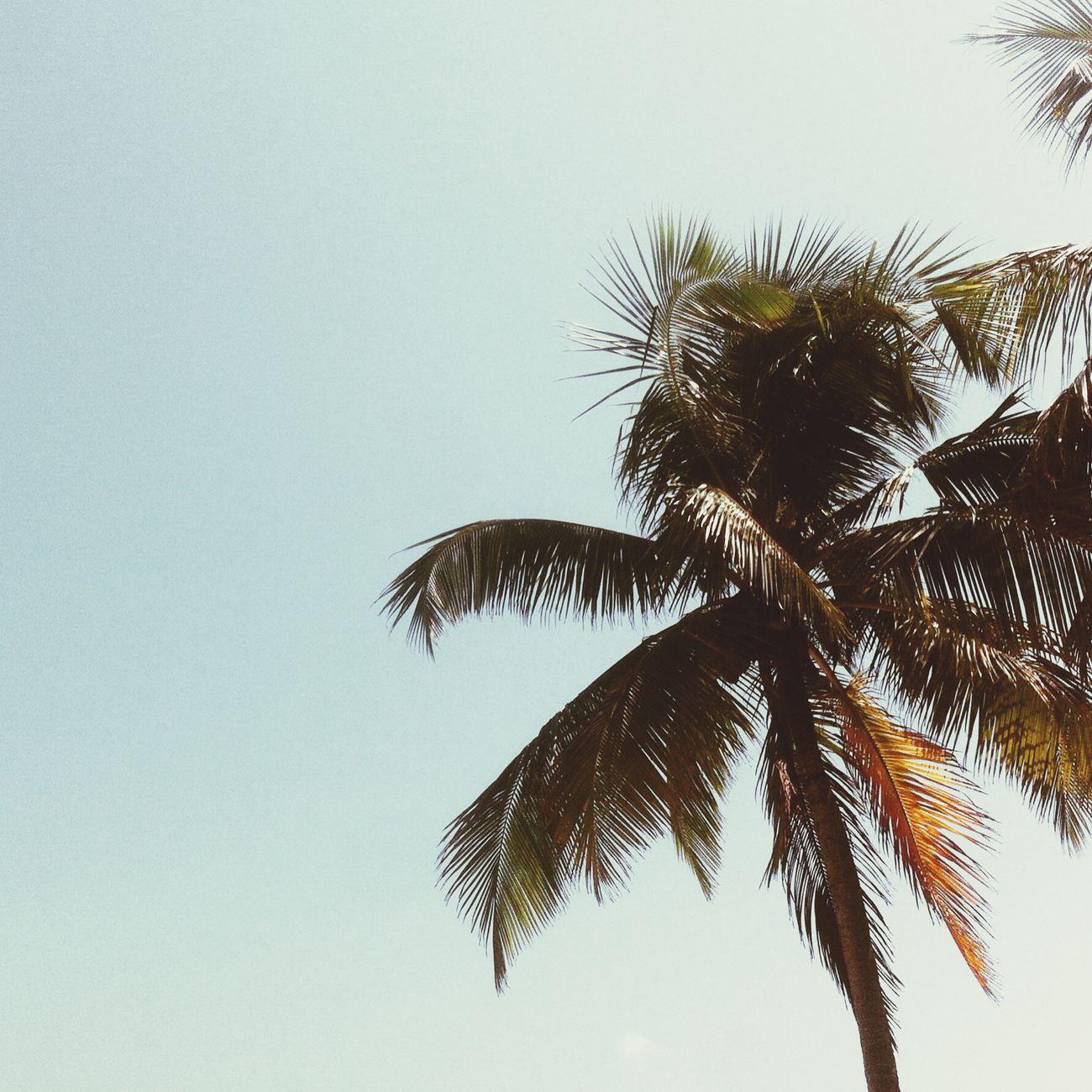 Surfing Sunshine Sea Enjoying The Sun summer Brazil ❤ Sol