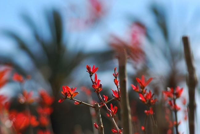 EyeEm Nature Lover Spring Has Arrived