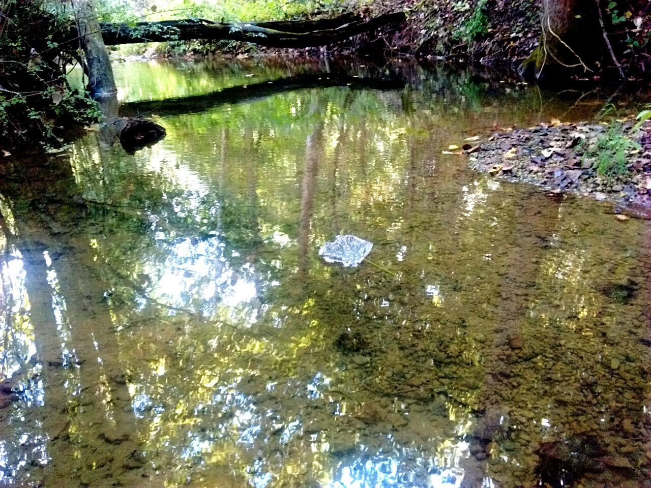 Fresh on EyeEm Creekside Trail Creek Creekside Water Reflection Tranquility Tranquil Scene Scenics Nature High Angle View Beauty In Nature Calm Growth Stream Green Color Non-urban Scene Waterfront Day Outdoors Majestic Standing Water No People Remote