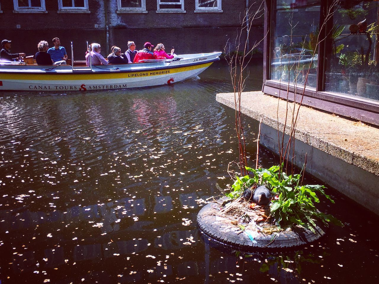 A coot with her ducklings in Amsterdam. Water Nautical Vessel Outdoors River Transportation Day Waterfront Real People Moored Nature Building Exterior Architecture Tree Houseboat Prinsengracht Canal Dutch Canals Amsterdam Canal Coot Ducklings