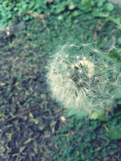 Taking Photos Natura Beautiful