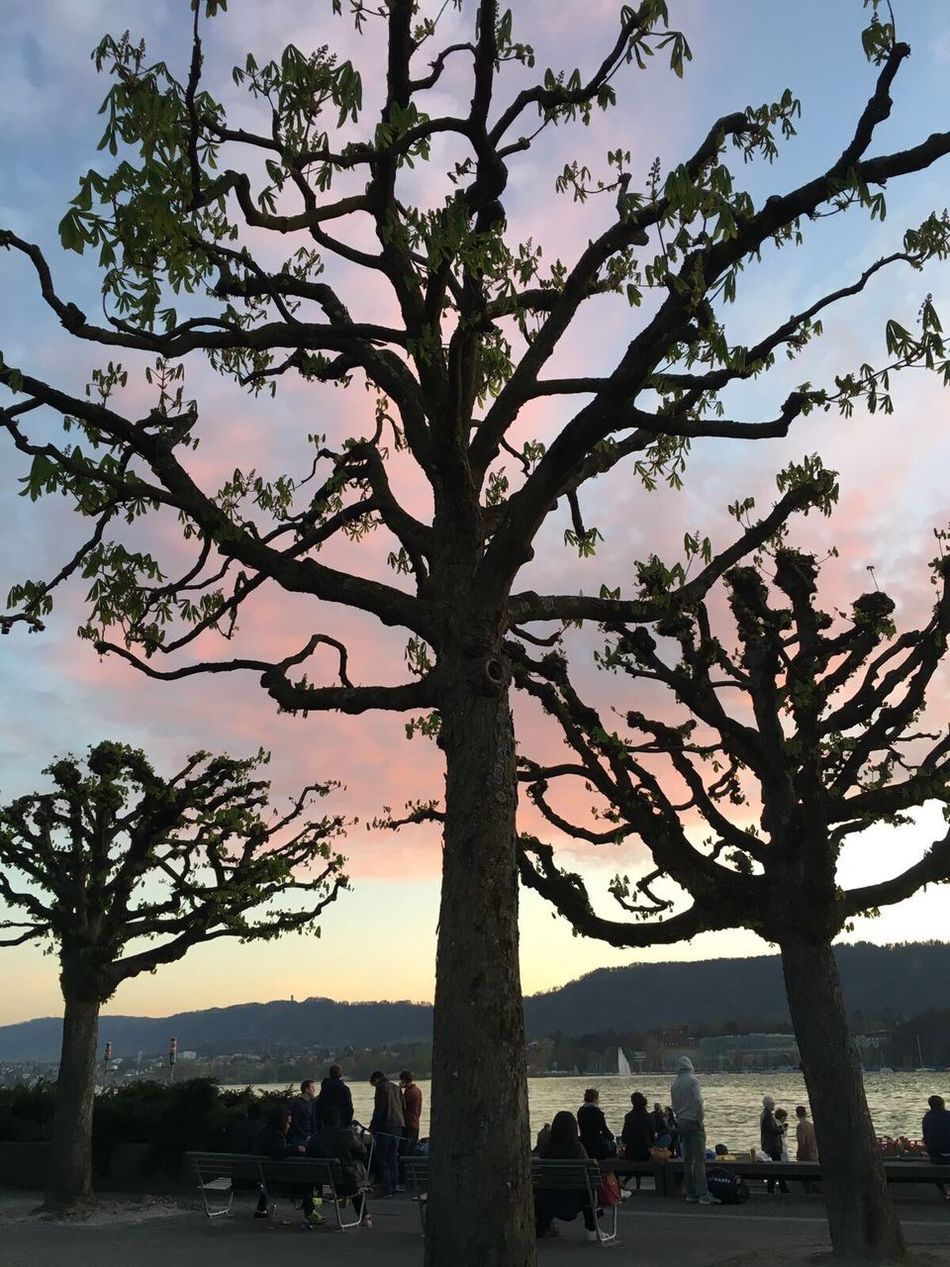 Lakezurich Sunset Spring Spring Into Spring People
