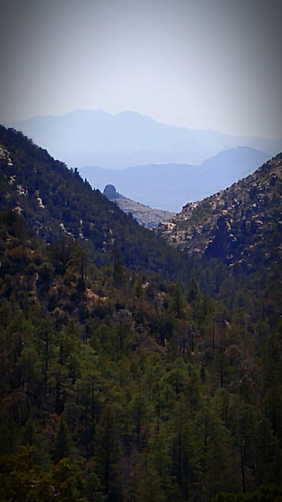 Eh why not add some random shots? Hiking Mountlemmon Greenmountaintrail