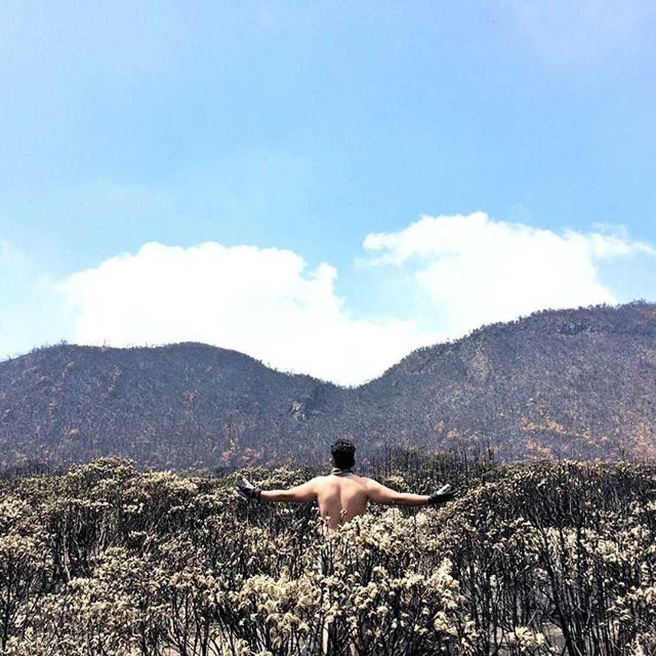 .Black Forest. 14wayspapandayan . . . 4 ha of woods and edelweis field scorched last month in Tegal Alun, Mt. Papandayan. Whos fault is this? We dont know for sure. Id_pendaki Instanusantara Jj_tinypeeps Vscogood Wanderlust Wanderlustsyndicate Livefolkindonesia Mountain Minimalpeople Akujalanjalanloh