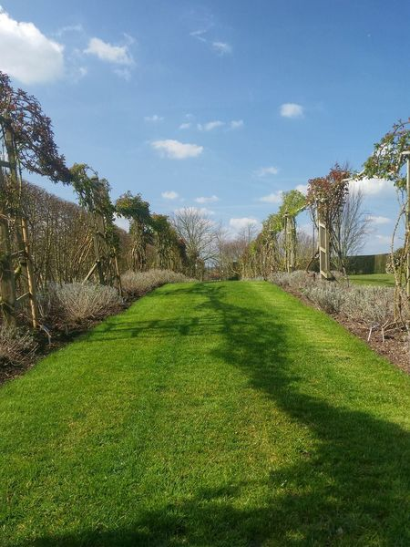 Low Angle View Trellises Grass Lawn Blue Sky Light Clouds Spring Has Arrived Light And Shadow Landscapes