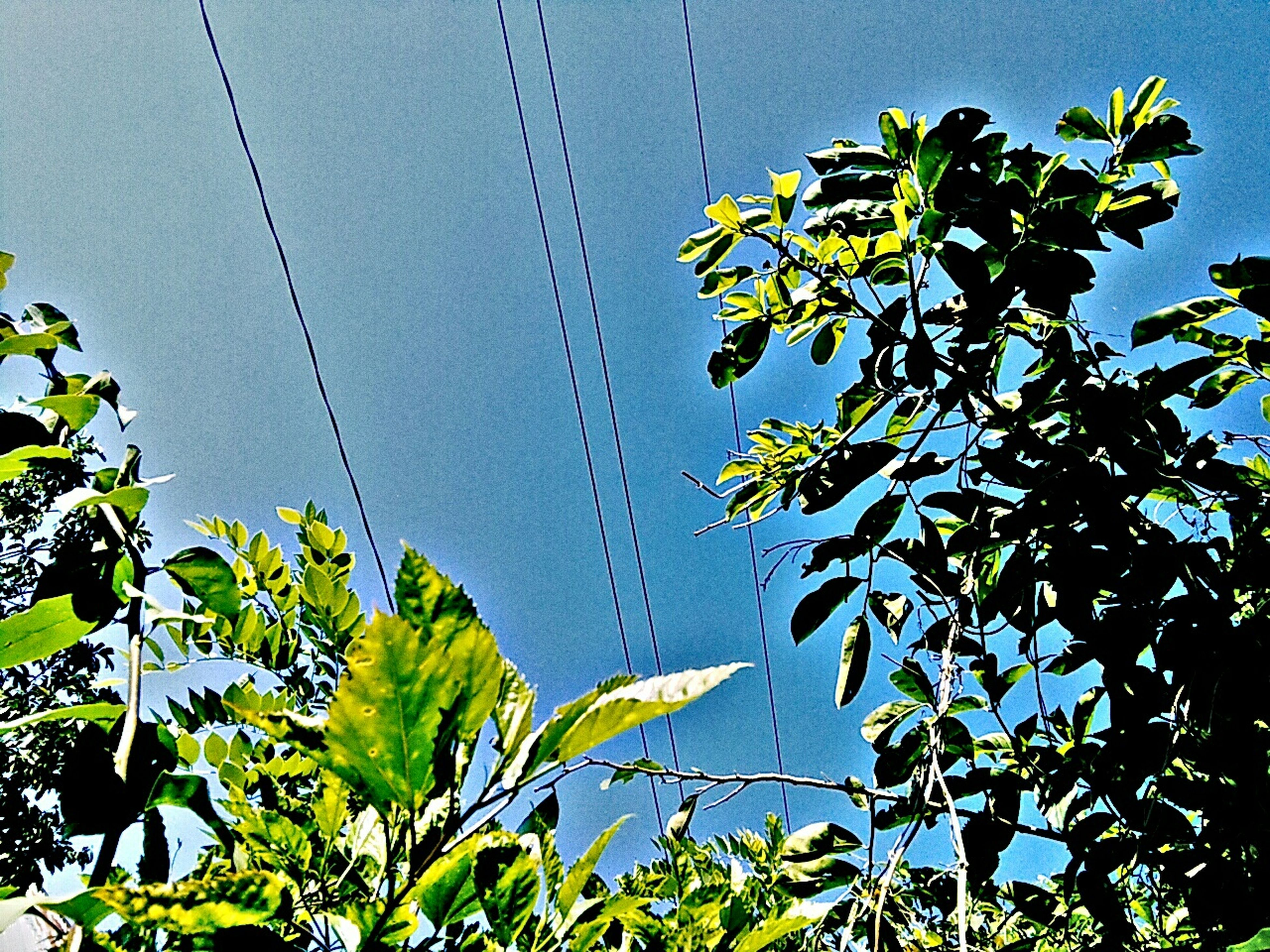 growth, low angle view, leaf, clear sky, day, nature, no people, blue, freshness, tree, outdoors, sky, fragility, flower, beauty in nature