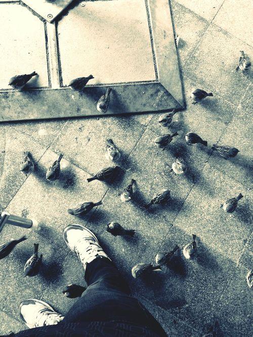 . Die Vögel Black & White Raubtierfütterung