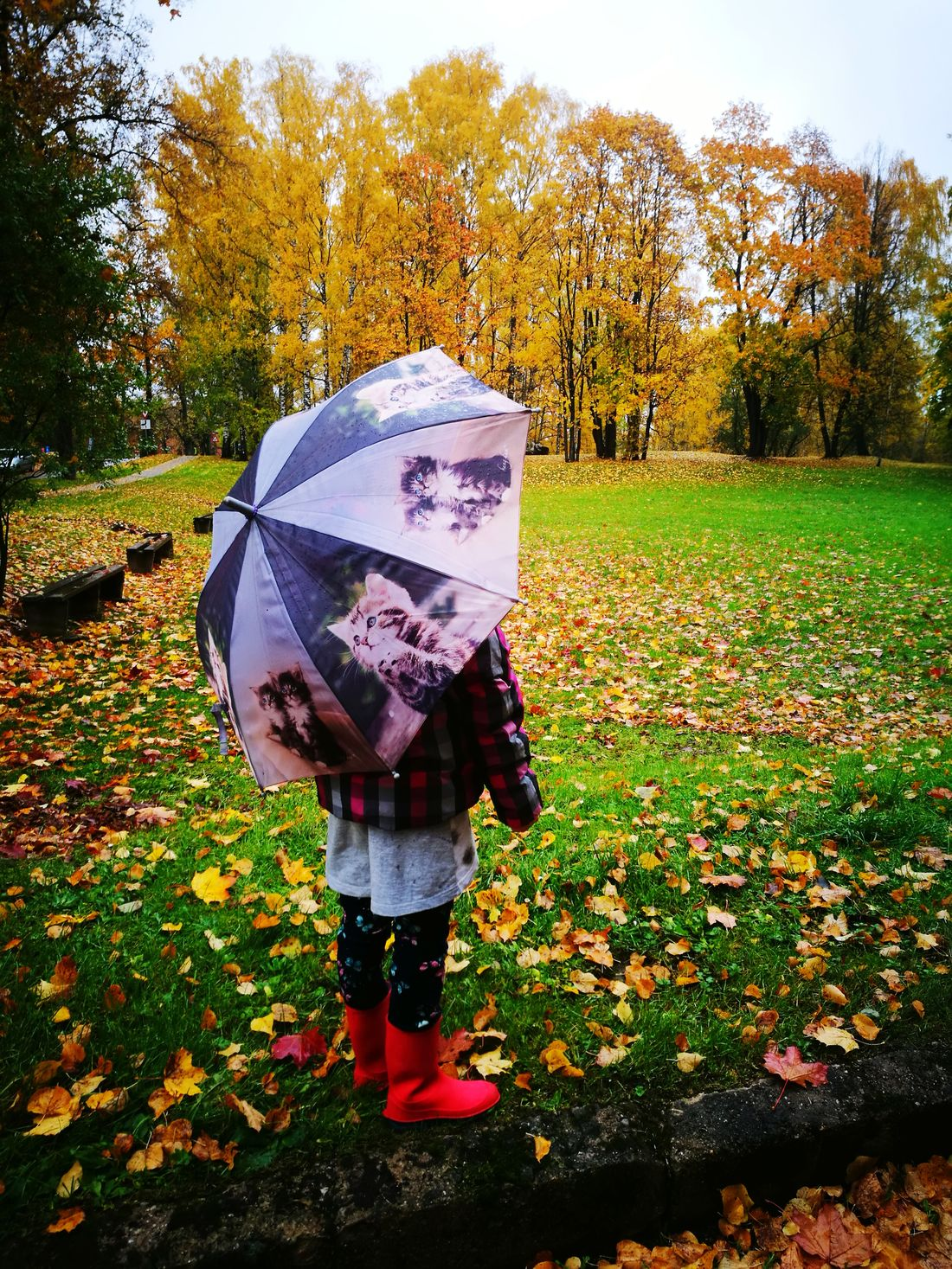 Walking Day Tree Umbrella Girl Autumn Autumn Colors Autumn🍁🍁🍁 Rein Reinyday