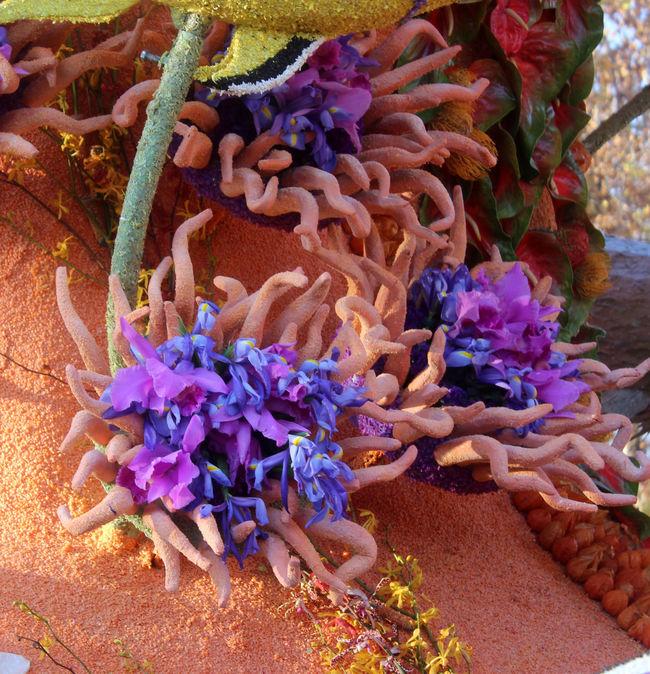 Beauty In Nature Close-up Flower Flower Arrangement Freshness Multi Colored Petal Purple Rose Parade Float