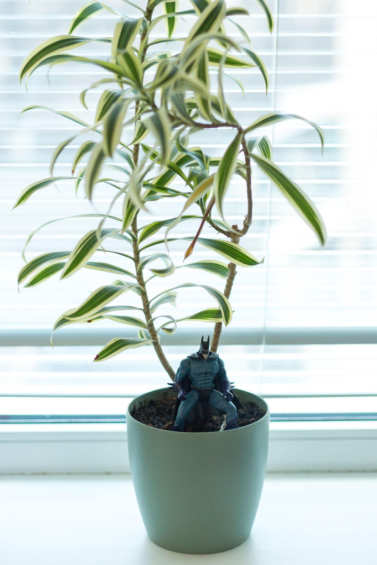 batman toy in the plant Batman Jalousie Plant Toy Venetian Blinds Window