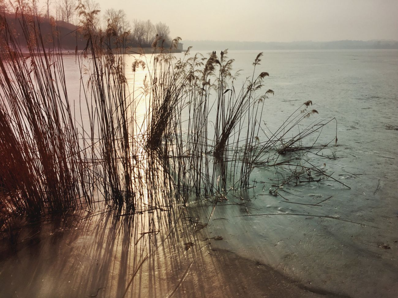 Iced lake Nature Outdoors Tranquil Scene Tranquility Iced Water Beauty In Nature Horizon Over Water Idyllic Beach Walking Around EyeEm Nature Lover Eye4photography  From My Point Of View from Annone in Brianza