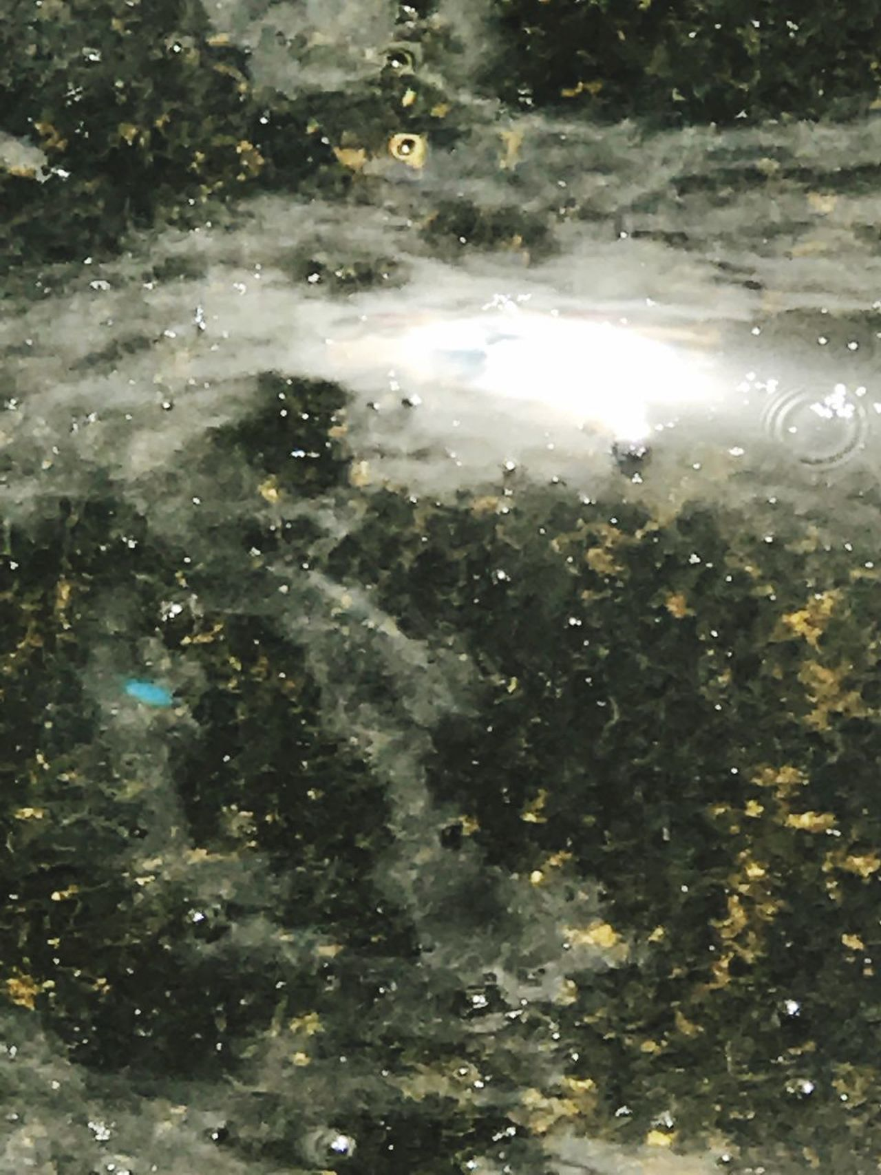 Backgrounds Water Full Frame No People Illuminated Star - Space Underwater Space Night Outdoors Nature Animal Themes Satellite View Refraction Close-up Astronomy Galaxy UnderSea