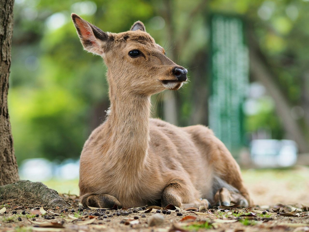 Beautiful stock photos of deer, Animal Themes, Animals In The Wild, Close-Up, Comfortable