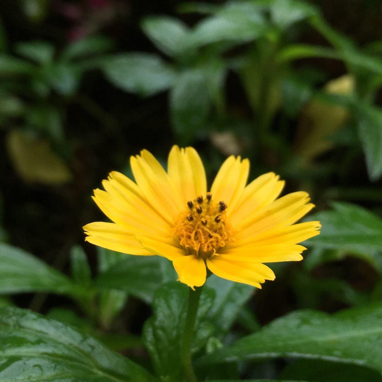 我有點不想管別人喜歡看什麼 我分享我想分享的 就這樣簡單! Share A Photograph Flower Yellow