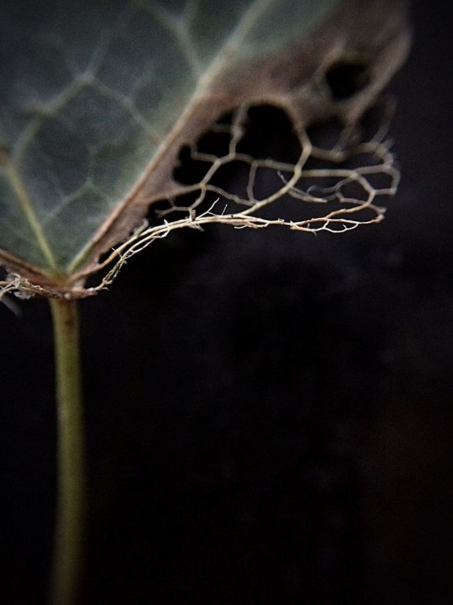 Beauty Of Decay Details Of Nature Macro_collection AMPt - My Perspective Autumn Leaves EyeEm Best Shots - Nature