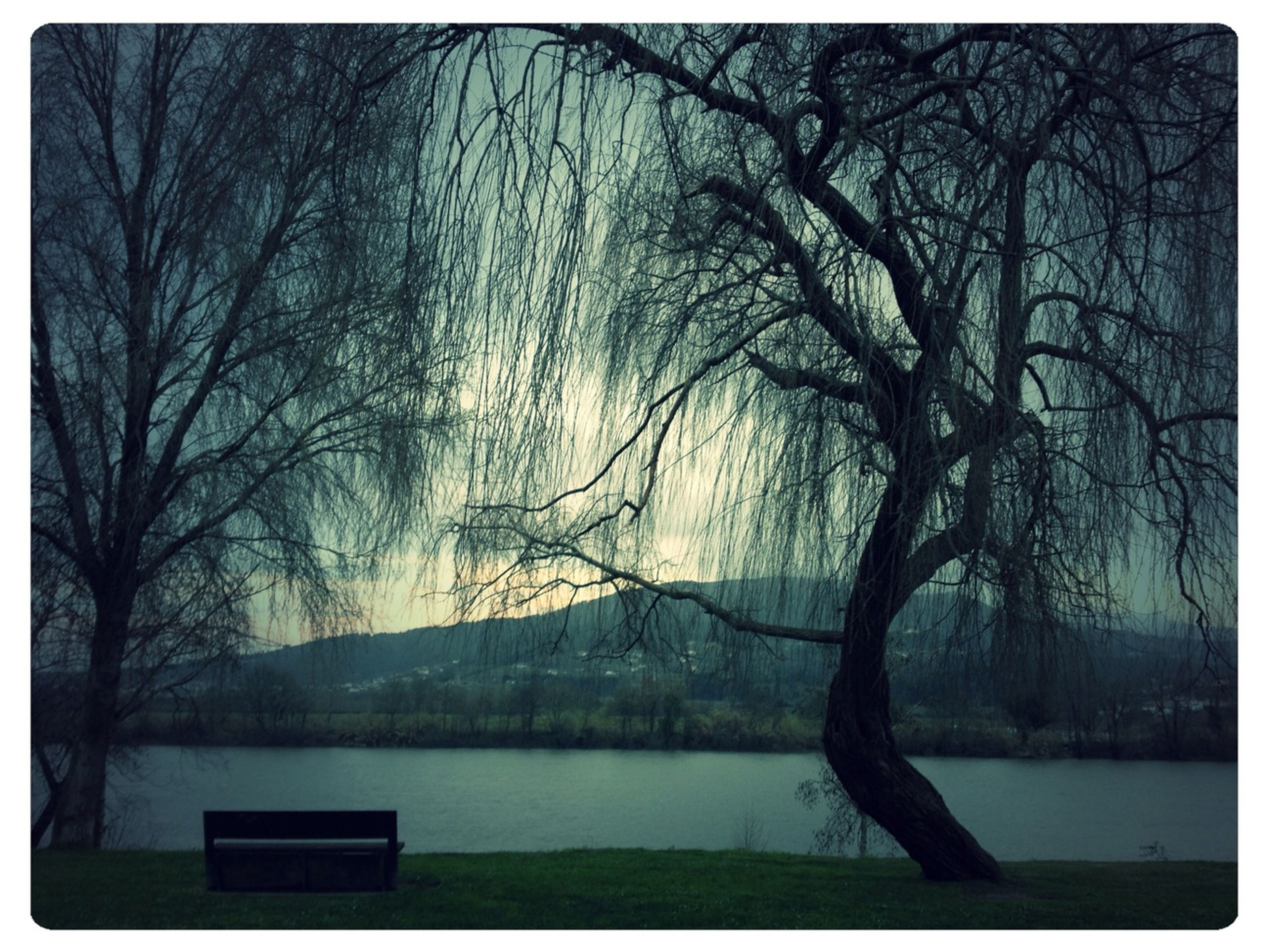 tree, water, bare tree, tranquility, tranquil scene, branch, lake, scenics, nature, beauty in nature, transfer print, auto post production filter, river, tree trunk, sky, idyllic, growth, lakeshore, outdoors, non-urban scene