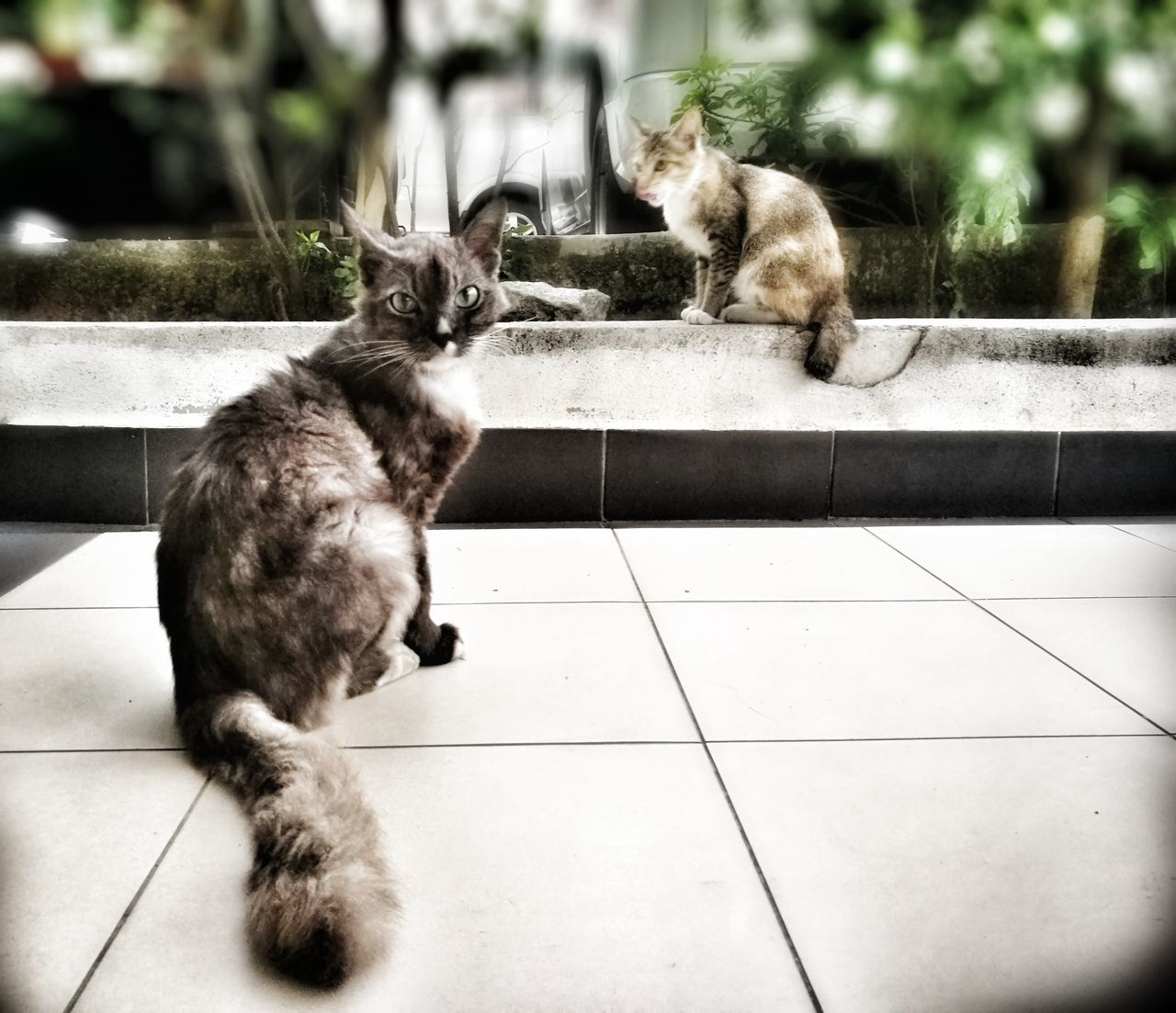 Animal Themes Domestic Animals Domestic Cat Pets HuaweiP9 Huawei P9 Plus Huaweiphotography Homeless Animal Kitten Cat Animal Homeless Cat Hua Wei P9 Plus Homeless Cats Homeless Homeless Kitten Homelessness  Outdoors Outdoor Photography Mammal