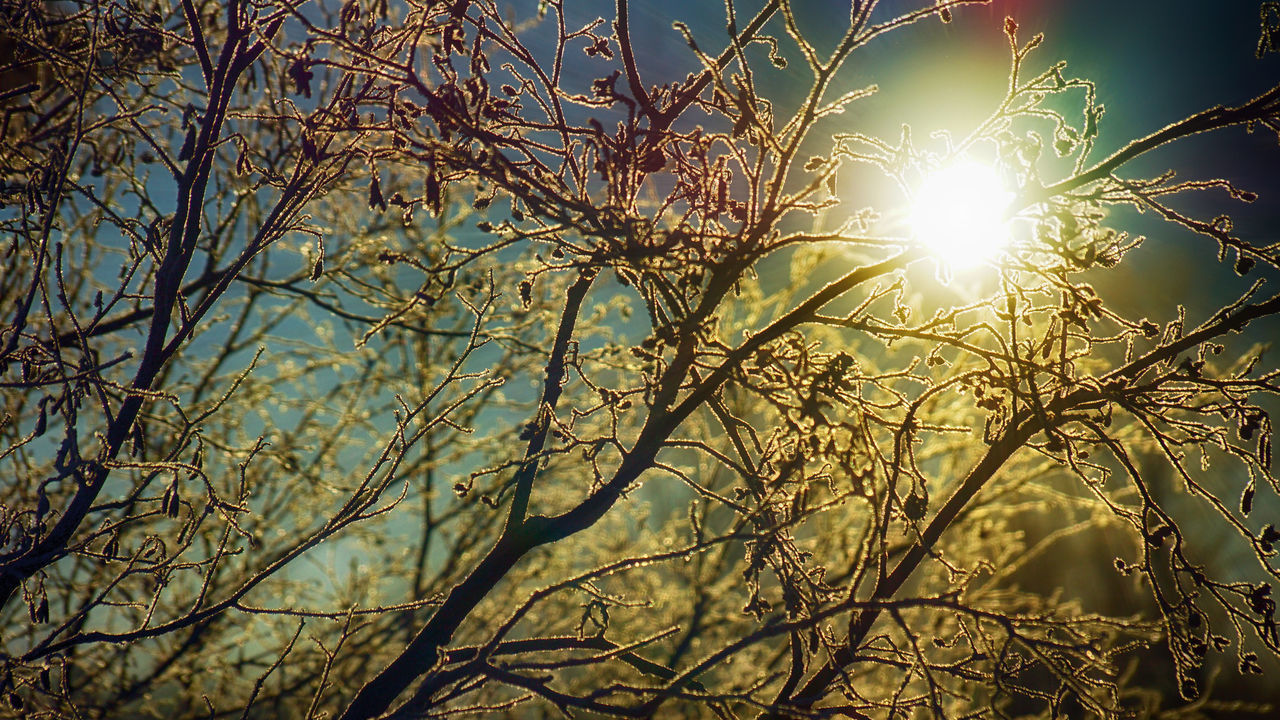 Morning light passing through icy branches . Beauty In Nature Branch Close-up Day Iced Icy Lens Flare Low Angle View Nature No People Outdoors Plant Scenics Sky Sun Sunbeam Sunlight Sunrays Sunrays Through The Branches Sunrise The Great Outdoors - 2017 EyeEm Awards Tree Winter Winter Trees Wintertime