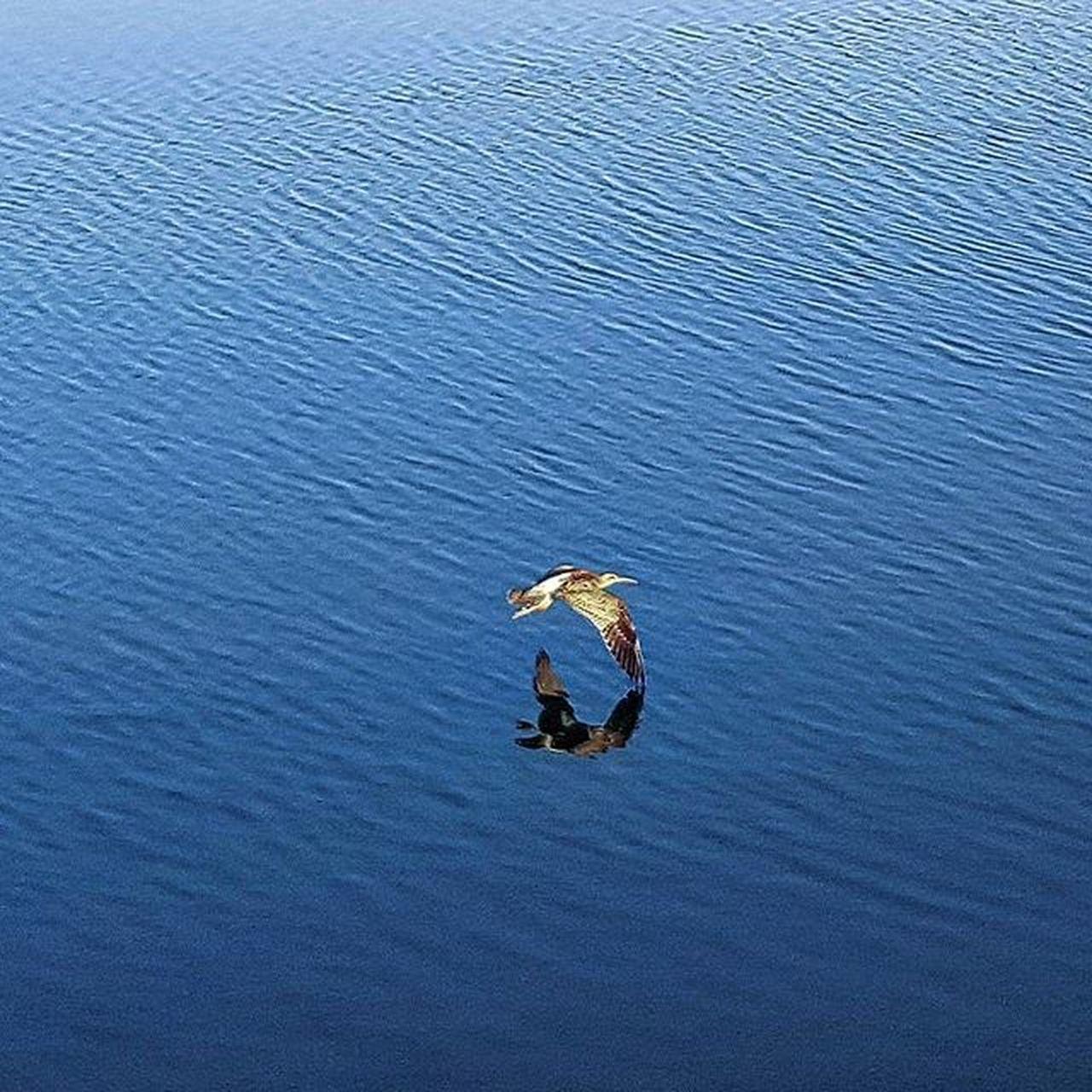 Luckyshot Samsungcamera DontKnowTheBreed Abudhabi UAE Unitedarabemirates Morning Sunrise Nature Birds Reflection Instagramfilter TBT  Throwbackthursday  Tbts Solitude