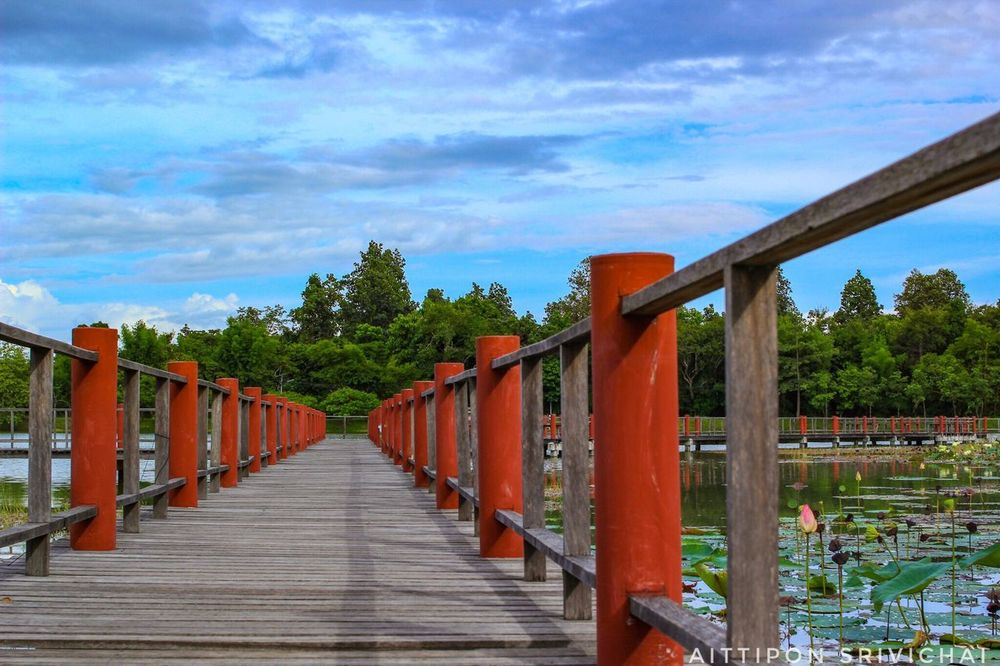 Cloud - Sky Tree Sky The Way Forward Railing Outdoors Bridge - Man Made Structure Day Built Structure Architecture No People Red Footbridge Travel Destinations Nature