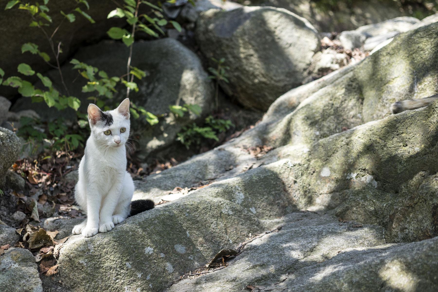 Kittens in the mountain Kittens Cat Nature Mountain Seoul_korea