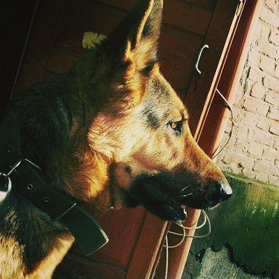 My dog. INGA. Моя собака. ИНГА. собака Dog