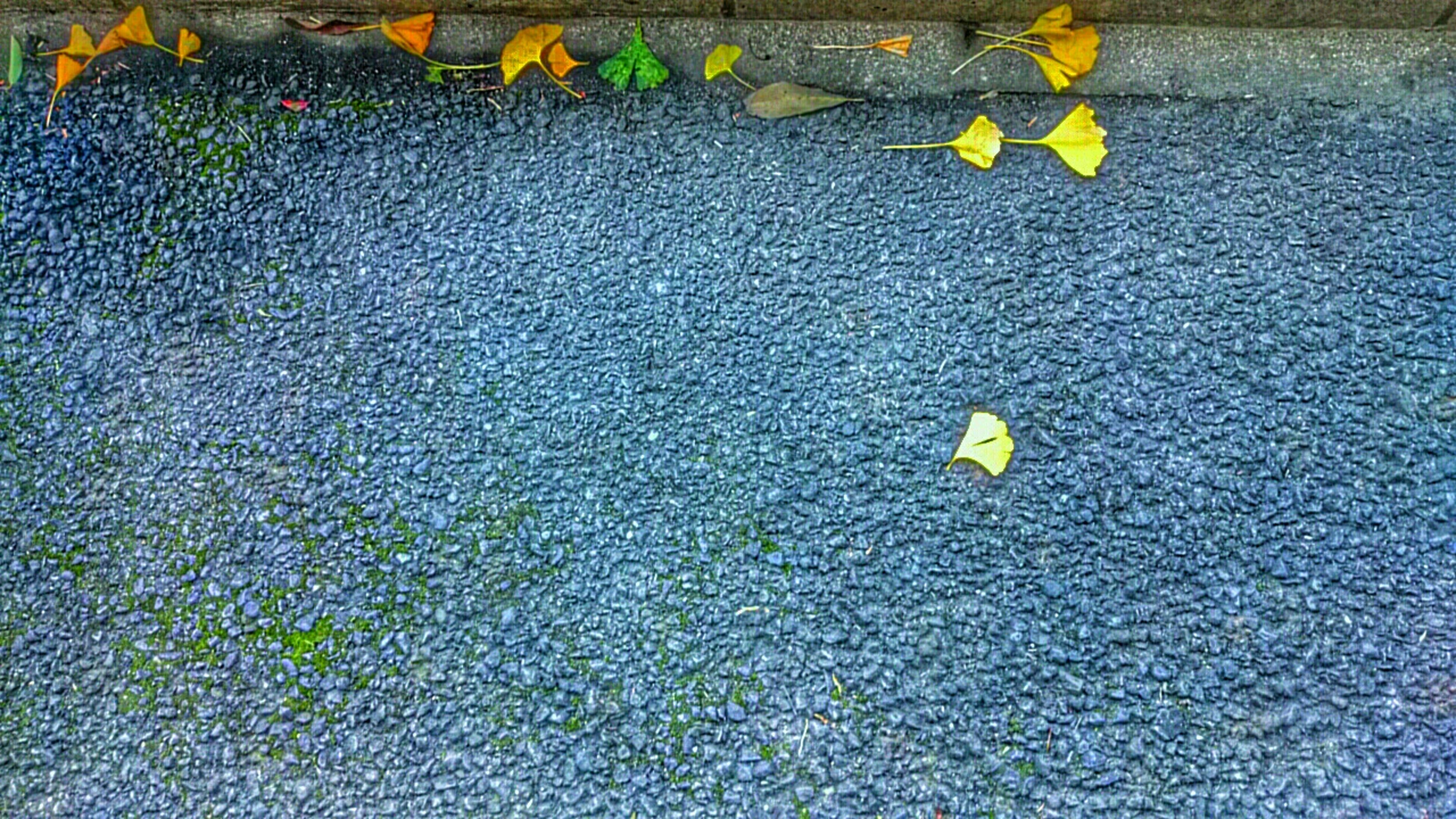 high angle view, yellow, street, asphalt, multi colored, sidewalk, day, cobblestone, textured, road, outdoors, transportation, paving stone, no people, full frame, leaf, pattern, road marking, fallen, directly above