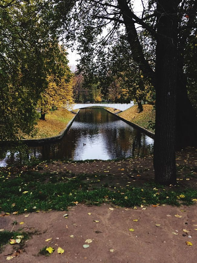 Treea:]e Water Autumn Park - Man Made Space Nature Park No People Beauty In Nature Riverbank 🌧 First Eyeem Photo