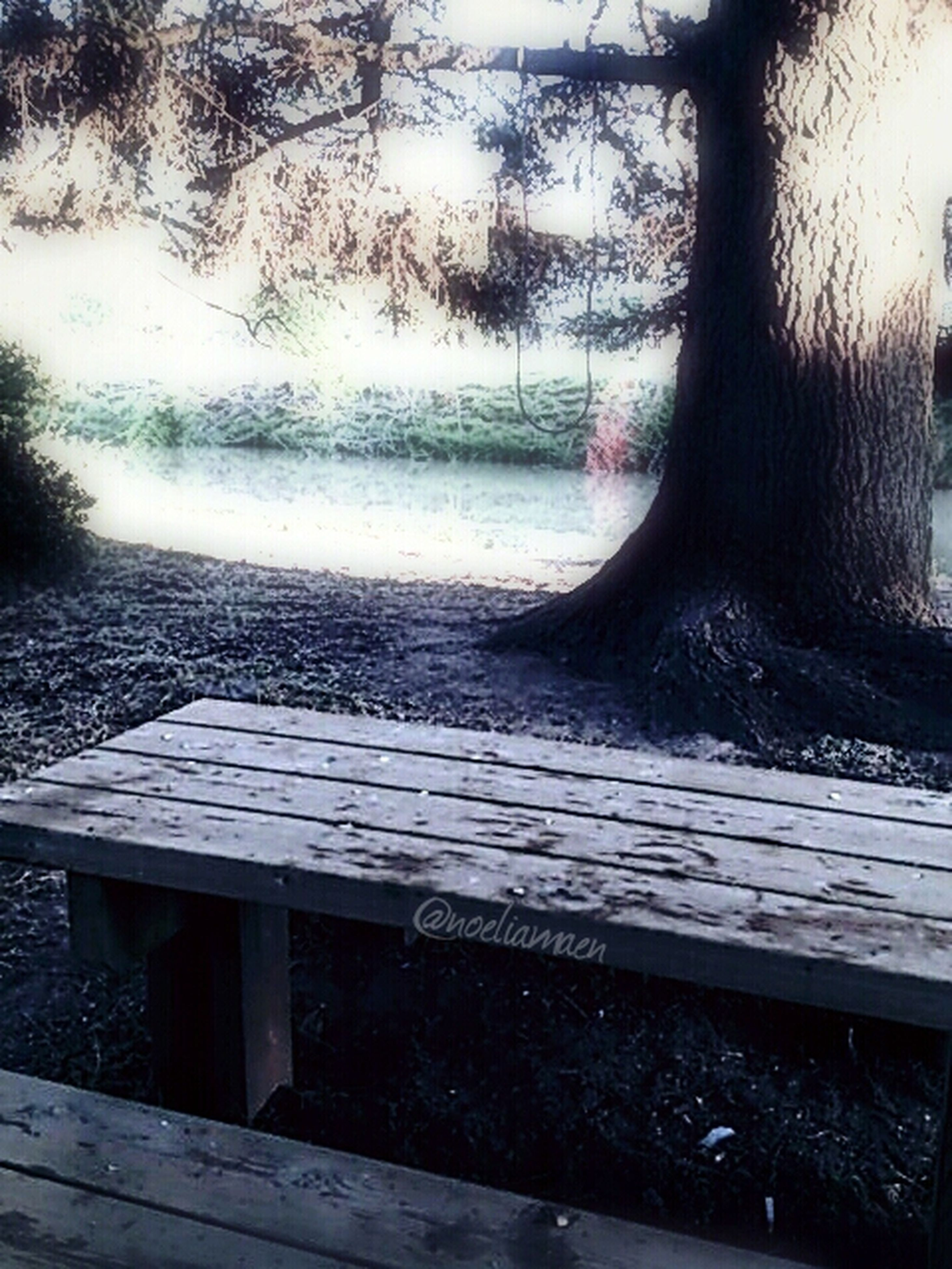 tree, wood - material, water, bench, day, nature, no people, wooden, lake, built structure, sky, tranquility, empty, wood, branch, outdoors, tree trunk, absence, reflection, table