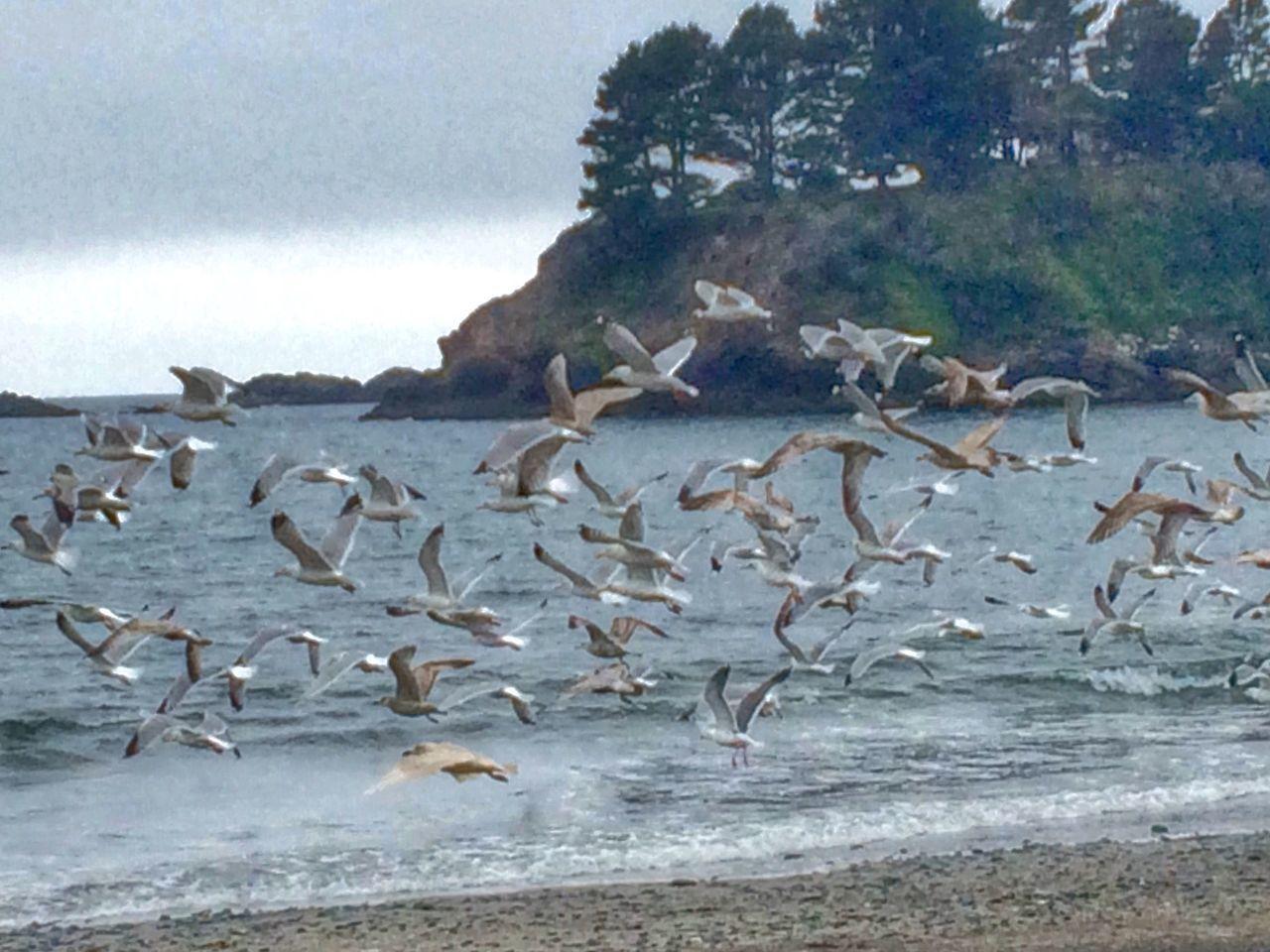 Birds EyeEm Birds Beach Beachphotography HDR Seagulls