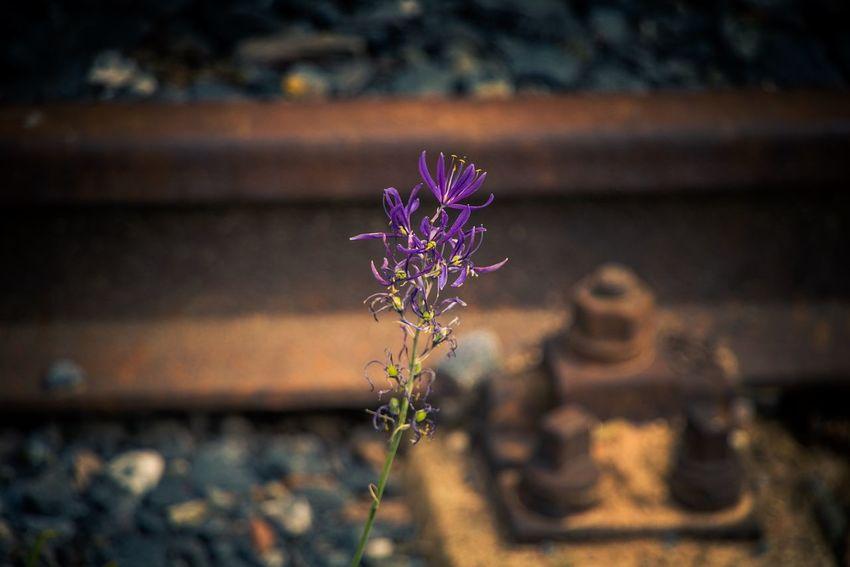 Beauty Is Everywhere  Beauty Is As Beauty Does Beauty Is In The Eye Of The Beholder :) Flowerphotography Makro Beauty Macrooftheday