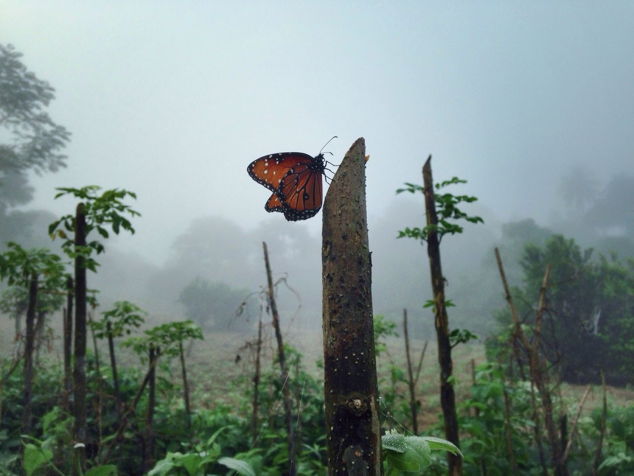 Beautiful stock photos of schmetterling, Animal Themes, Animals In The Wild, Beauty In Nature, Butterfly - Insect