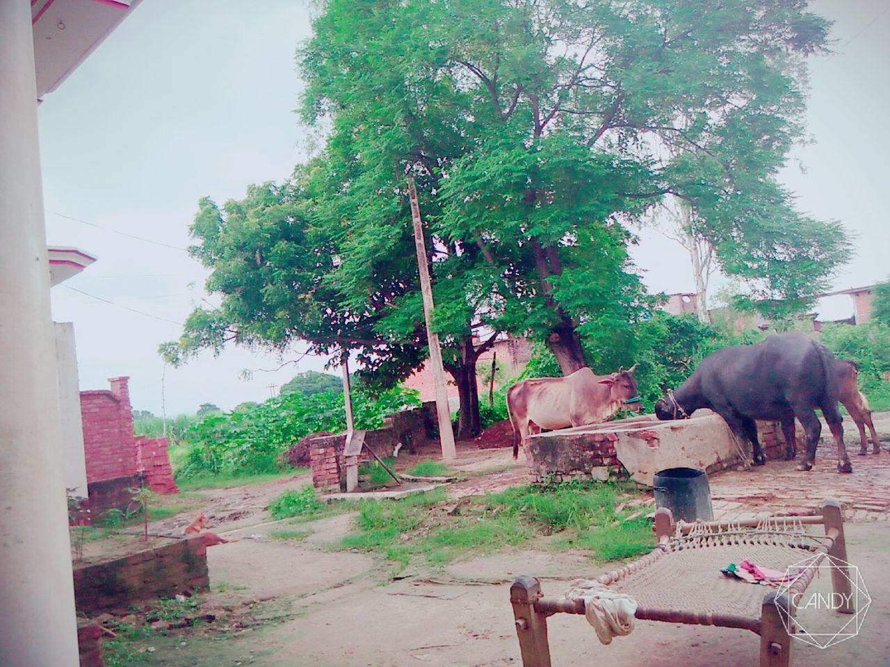 animal themes, mammal, tree, domestic animals, day, no people, outdoors, livestock, elephant, architecture, sky, nature