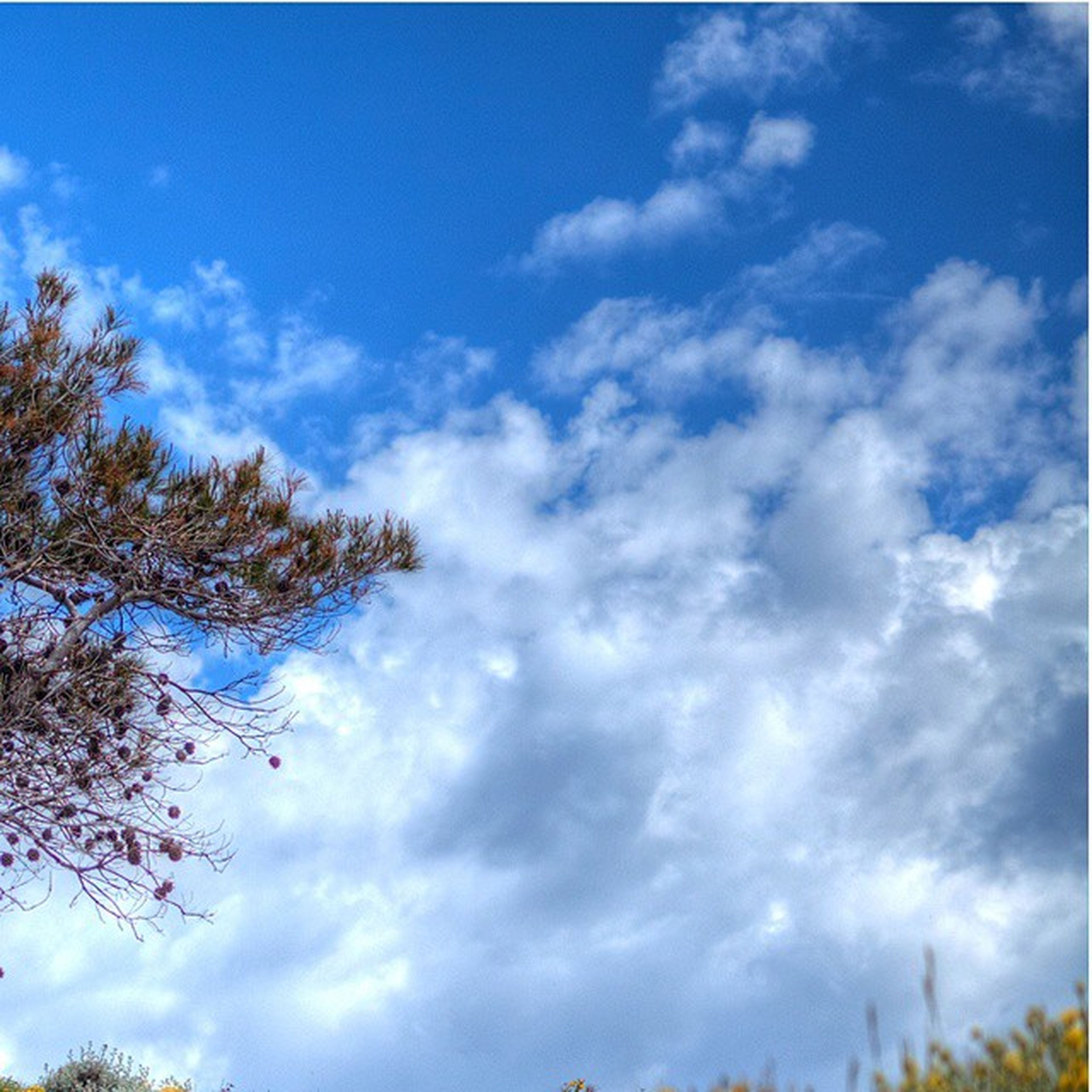 sky, low angle view, cloud - sky, tree, tranquility, beauty in nature, cloudy, cloud, nature, tranquil scene, scenics, blue, growth, day, outdoors, no people, branch, idyllic, white color, cloudscape