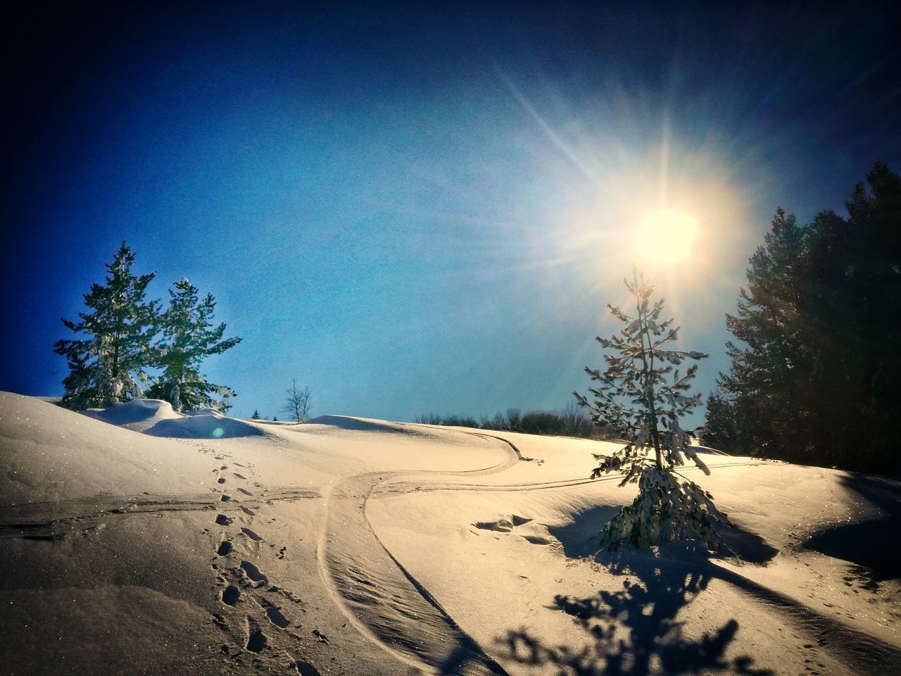 Climb Tree Sunlight Nature Clear Sky Beauty In Nature Sky Sun Blue Tranquility Sunbeam Shadow Tranquil Scene No People Scenics Outdoors Day Snow Star - Space Snowscape Dark Snowy Path Path Through Forest. Snowy Path Snowy Forest Snow ❄ Snowy Trees