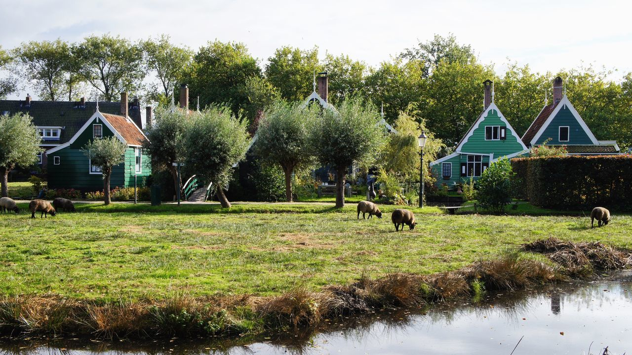 Zaandijk Netherlands Amsterdam