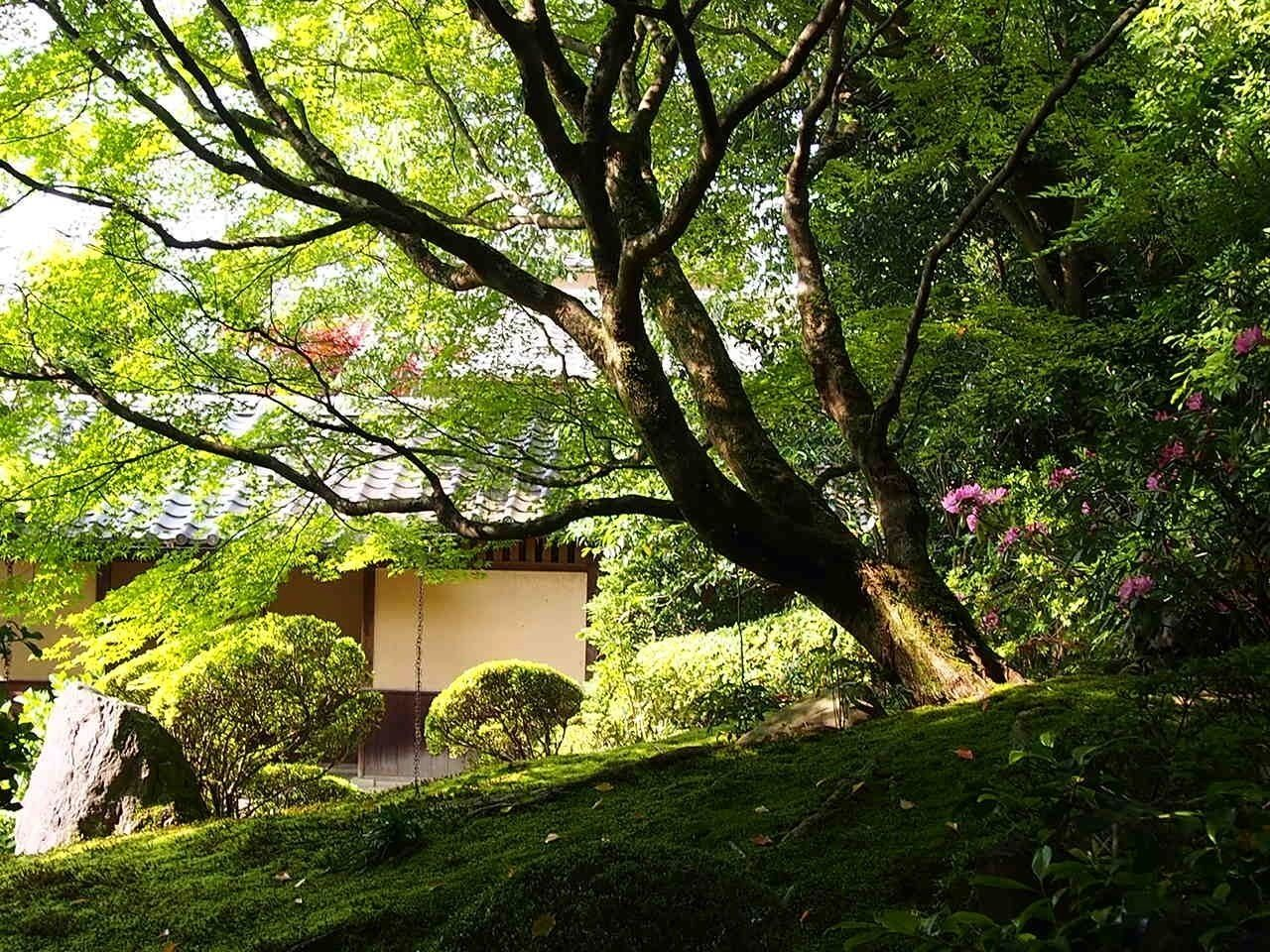 Garden EyeEm Nature Lover TreePorn Nature_collection
