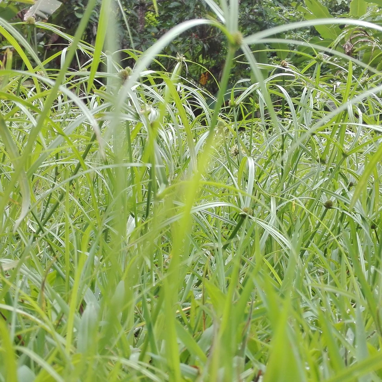 grass, growth, green color, plant, field, nature, close-up, no people, day, outdoors, full frame, beauty in nature, freshness