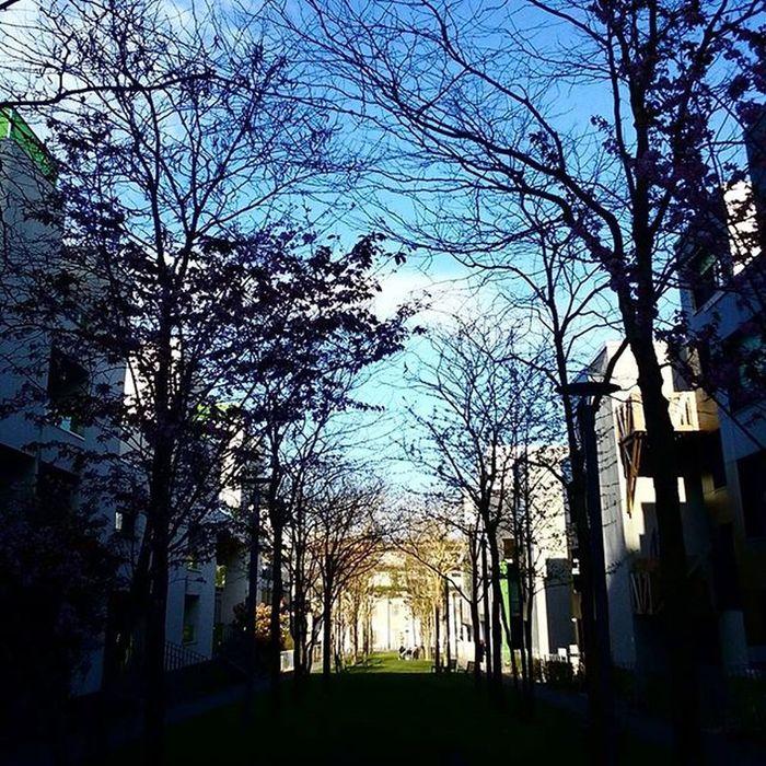 Clair / obscur Boishabite Jardin Urbanisme Nord Nordpasdecalais  Lille