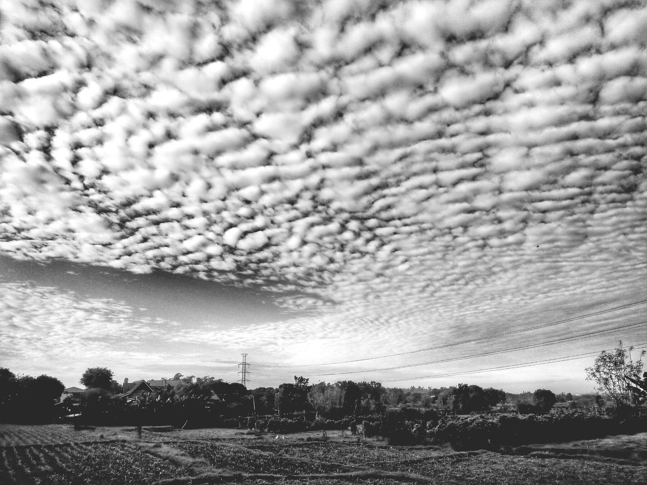 sky, nature, cloud - sky, tree, no people, beauty in nature, tranquility, scenics, field, landscape, outdoors, agriculture, day, rural scene, growth