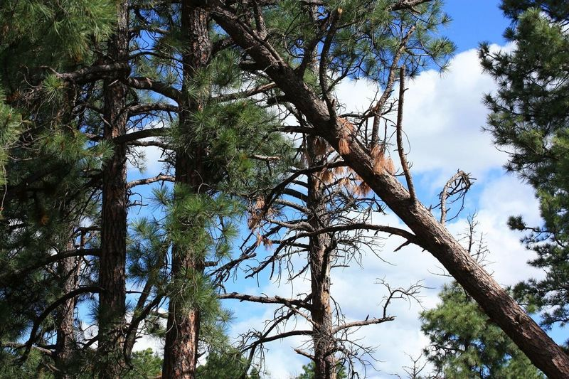 Tree Nature Low Angle View Branch Growth Outdoors Forest Sky Day Beauty In Nature No People Tree Trunk Tranquility Blue Scenics Animal Themes Fallen Tree Ruidoso, NM
