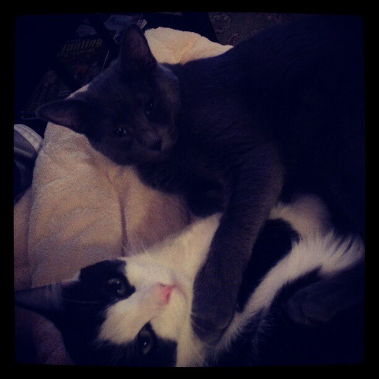 Snuggle time with Littlegriffen and Richardthecat