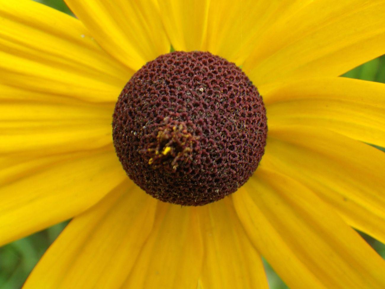 マクロ Good Morning Flower Yellow Macro