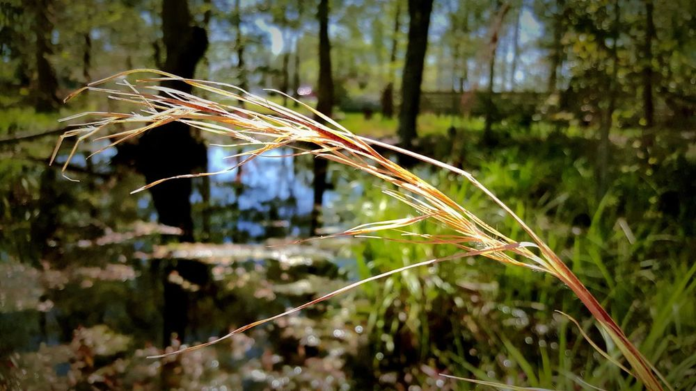 Straw grass blowing in the forefront. PhotographybyTripp Smartphone Photography Phoneography Samsung Galaxy Note 5 Camera360Ultimate Pixlr Beastgrip Pro Mothernature Blowing In The Wind... Selective Focus Manual Focus Check This Out Nature_collection EyeEm Nature Lover