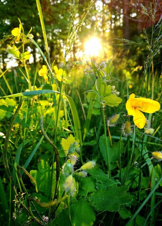 Beauty In Nature Flower Close-up Green Color Plant Sunset My Park🌲🏞🏡🌾👍 The Great Outdoors - 2017 EyeEm Awards