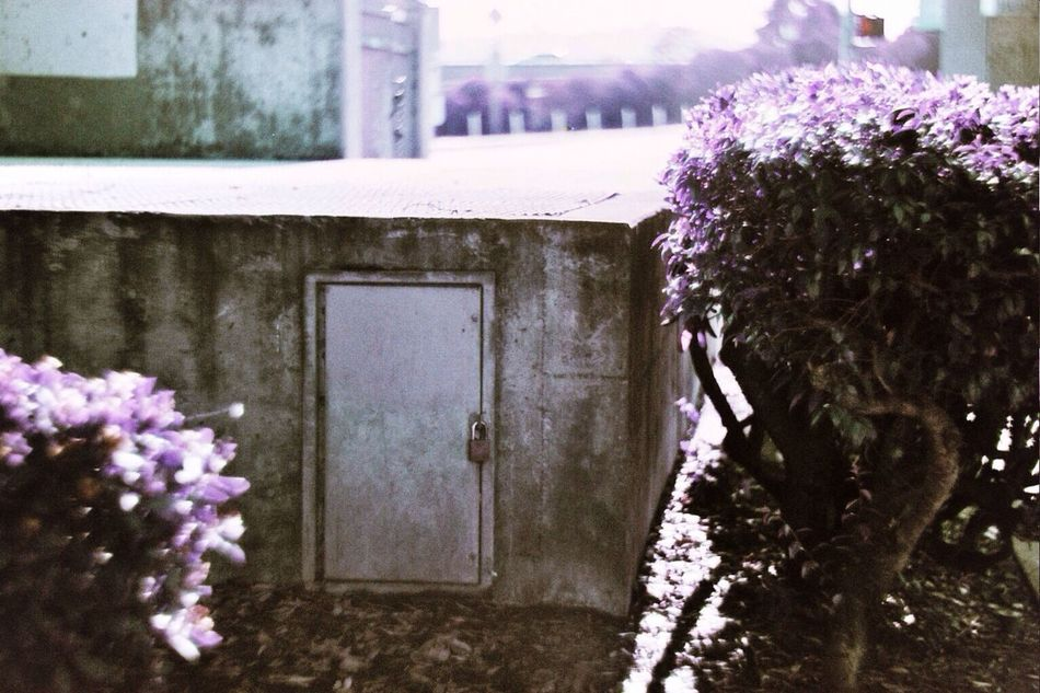 Lomochrome Purple SF Glen Park 35mm Film