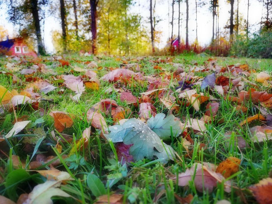 Autumn in Sweden Nature Beauty In Nature Growth Sweden ❤️ October Love Swedish Nature EyeEmNewHere EyeEm Selects Nature Autumn Beauty In Nature Sweden Plant Tranquility Outdoors No People Field Day Autumn Tree Grass Forest Scenics Leaf Landscape